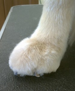 paw cropped