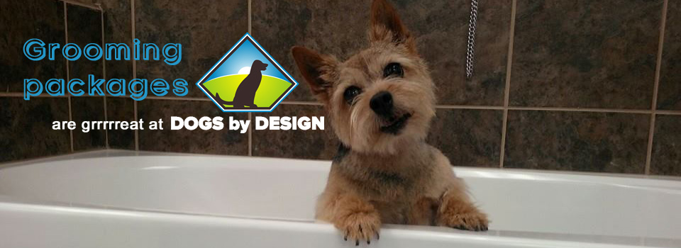 pup-in-tub-web-banner-copy